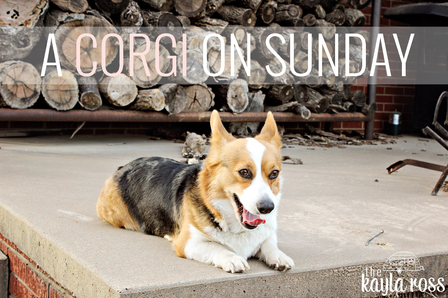 a_corgi_on_sunday_the_kayla_ross